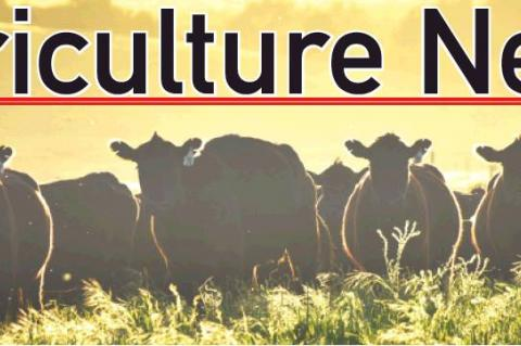 Researchers work to answer livestock production issues