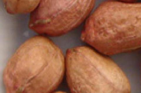 The four types of peanuts The four types of PEANUTS