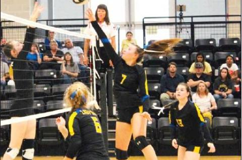 Lady Cats fall to Plains