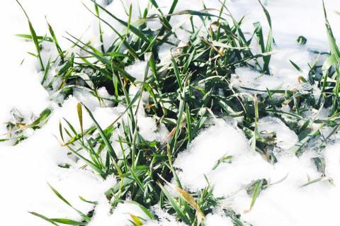 Winter storm offers few silver linings