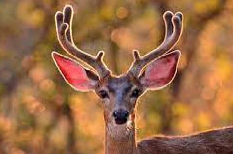 Biologists Remind Hunters of New CWD Zone in Lubbock Area