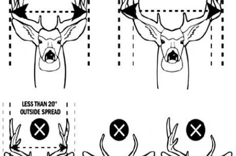 Local counties ready for additional Wardens during Mule Deer Season opener