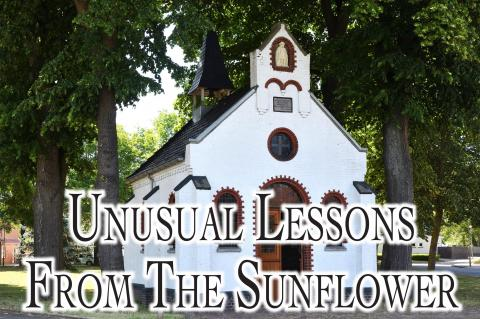 UNUSUAL LESSONS FROM THE SUNFLOWER
