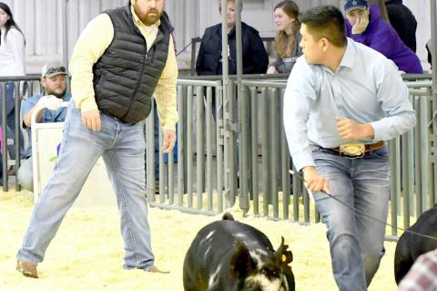 TCLA Gearing Up For 2021 Stockshows