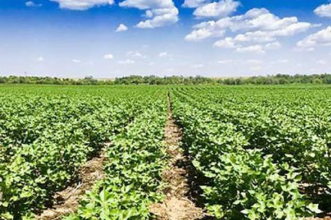 USDA Announces Loan Rates for 2020 Crop Peanuts