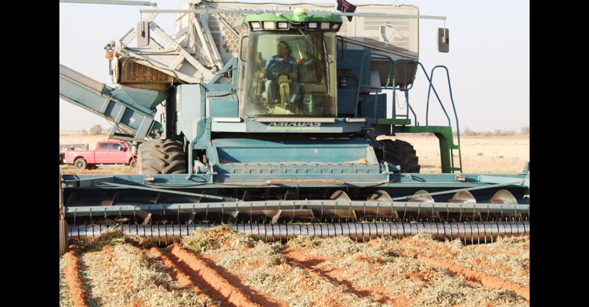 Harvest begins amid drought and COVID