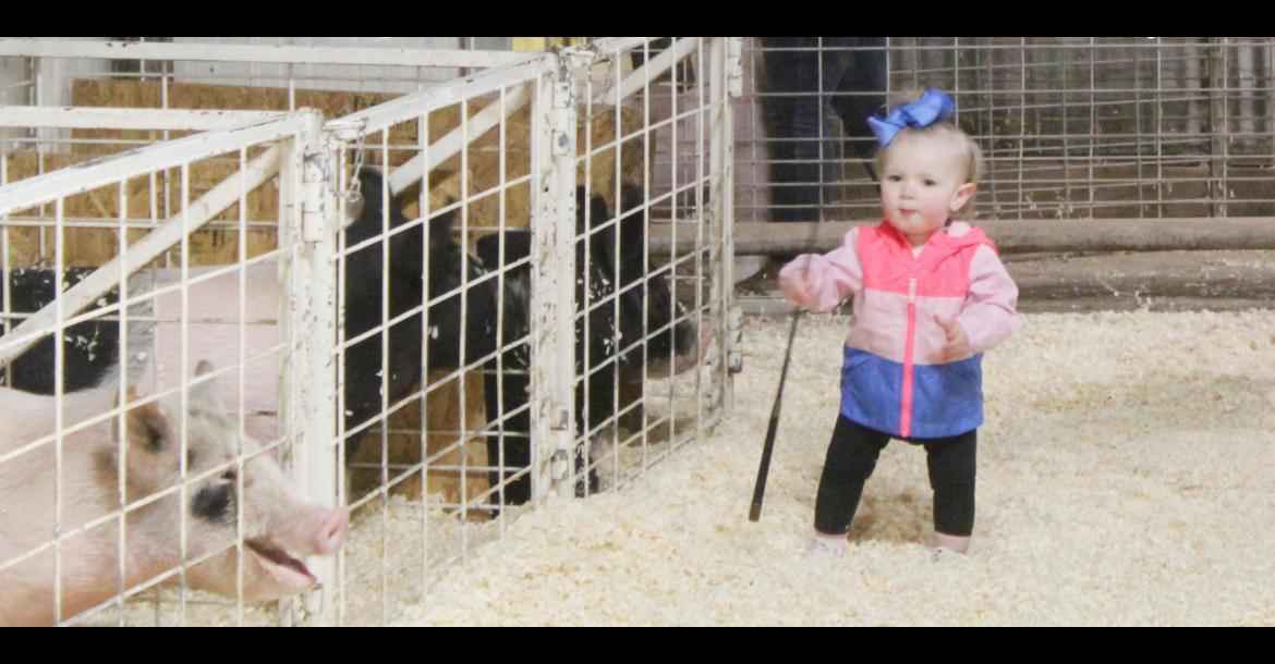 2021 Terry County Livestock Show